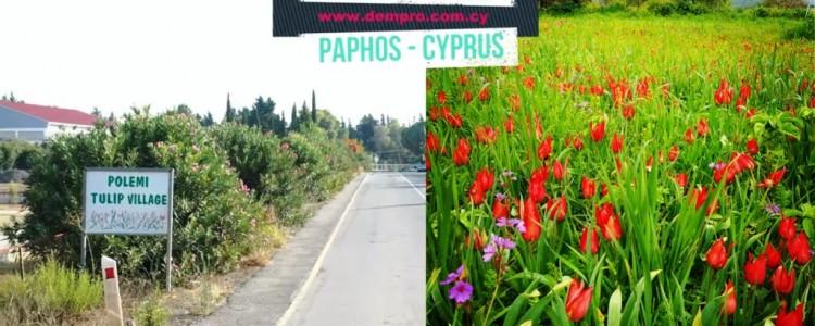 Polemi Village in Paphos, Cyprus